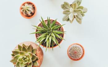 The Annex Succulents